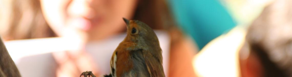 Els valors educatius dels tallers d'anellament d'ocells